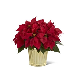 Picture of Poinsettia Planter by Better Homes and Gardens