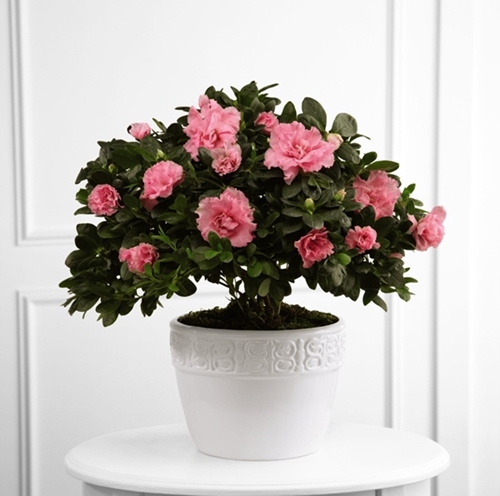 Picture of Vibrant Sympathy Planter